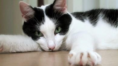 Photo of Lo último: estado de Nueva York prohíbe cortarle las uñas a los gatos