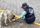 Animales vulnerables reciben alimentación los fines de semana de confinamiento