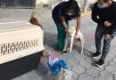 Caninos y felinos vulnerables son atendidos en Calderón