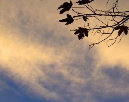 autunno-vienna-austria-colori-stagione-foglie-natura (1)