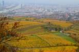 autunno-vienna-austria-colori-stagione-foglie-natura (9)