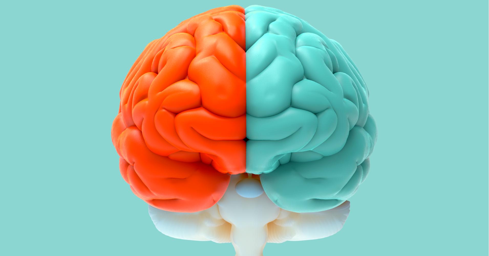 Left Brain Right Brain Test