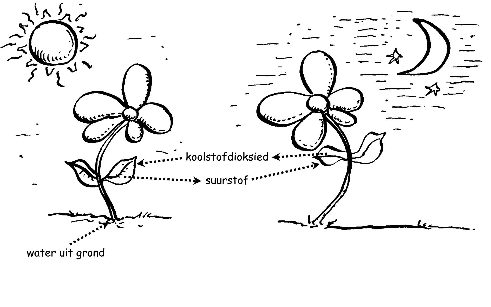 Natuurwetenskappe, Die voortbestaan van plante, By