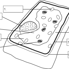 Flower Parts Diagram Without Labels 2002 Chevrolet Silverado Radio Wiring Structure Of A Plant Cell By Openstax Quizover