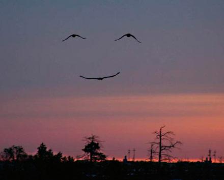 sonrie-vale-la-pena