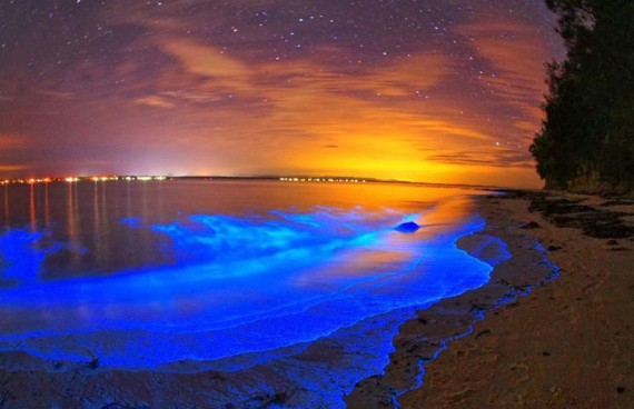 photo_plage_maldives_bioluminescence_cover