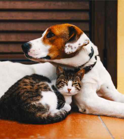 Assicurazione Cani Gatto