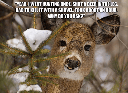 Bad Girl Quotes Wallpapers Famous Quotes About Hunting Sualci Quotes