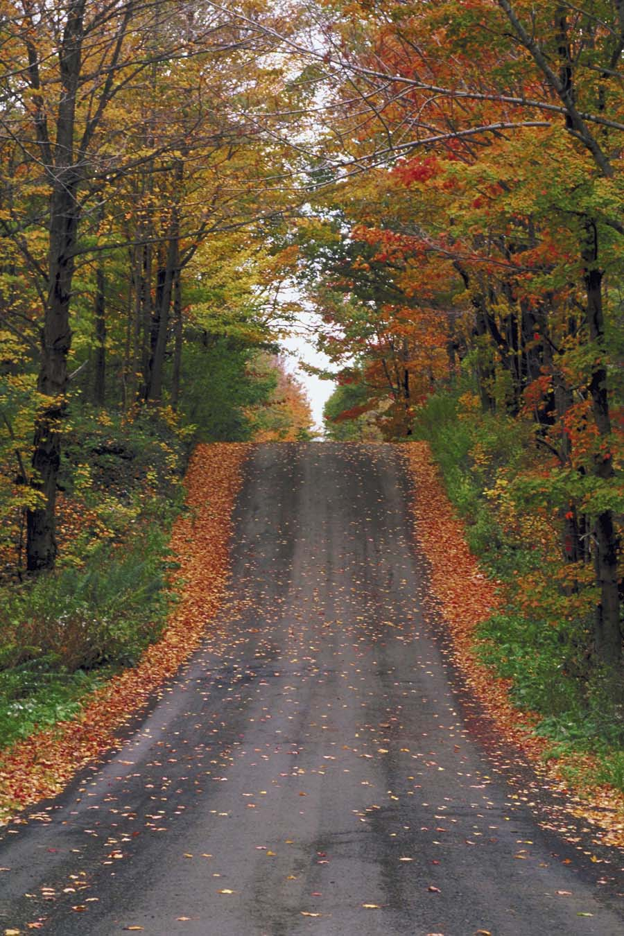 Fall Country Wallpaper Famous Quotes About Upstate New York Sualci Quotes
