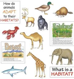 Quotes about Animal habitats (19 quotes) [ 900 x 900 Pixel ]