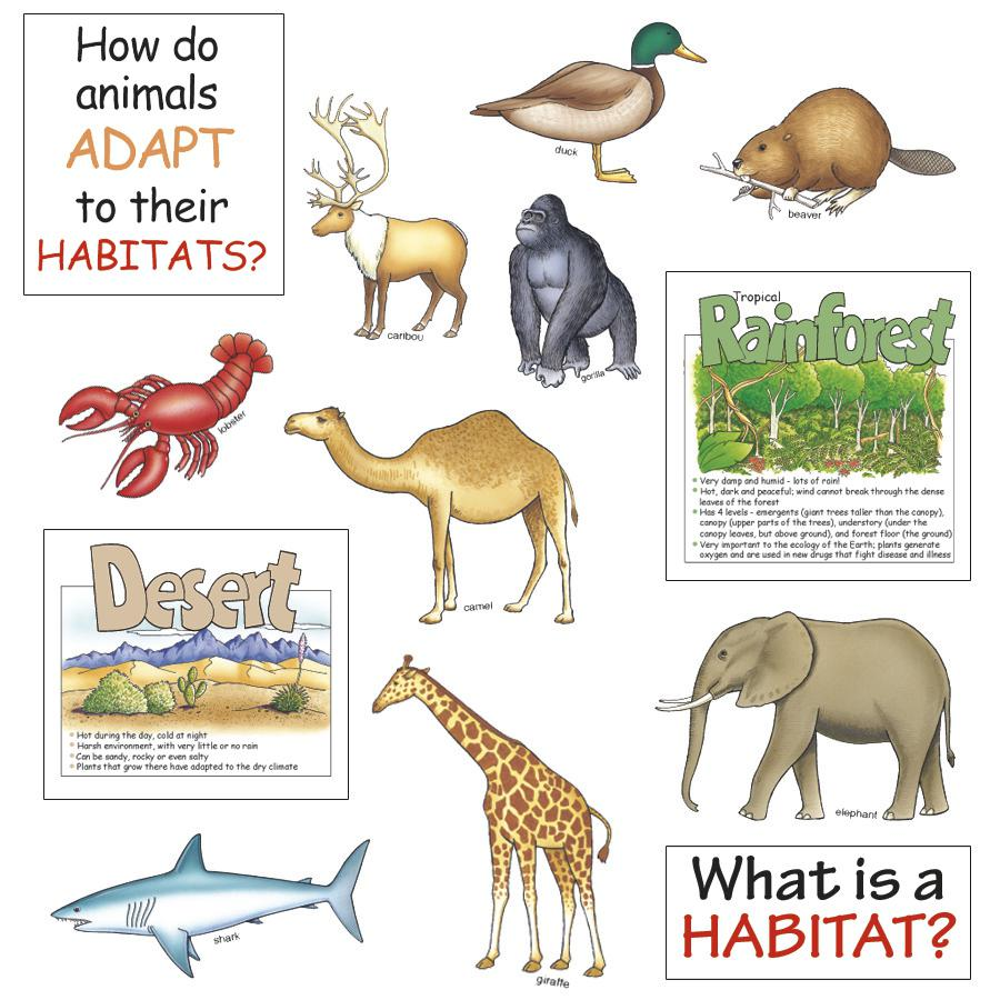 hight resolution of Quotes about Animal habitats (19 quotes)