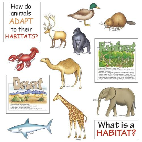small resolution of Quotes about Animal habitats (19 quotes)