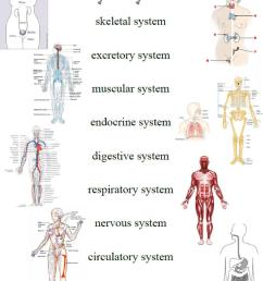 Quotes about Body systems (51 quotes) [ 1442 x 1118 Pixel ]