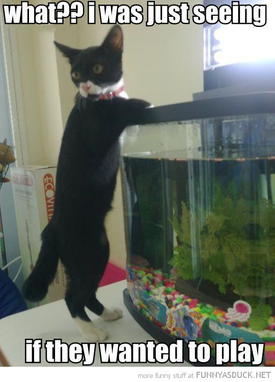 Funny Fish Aquarium Quotes   Allcanwear org