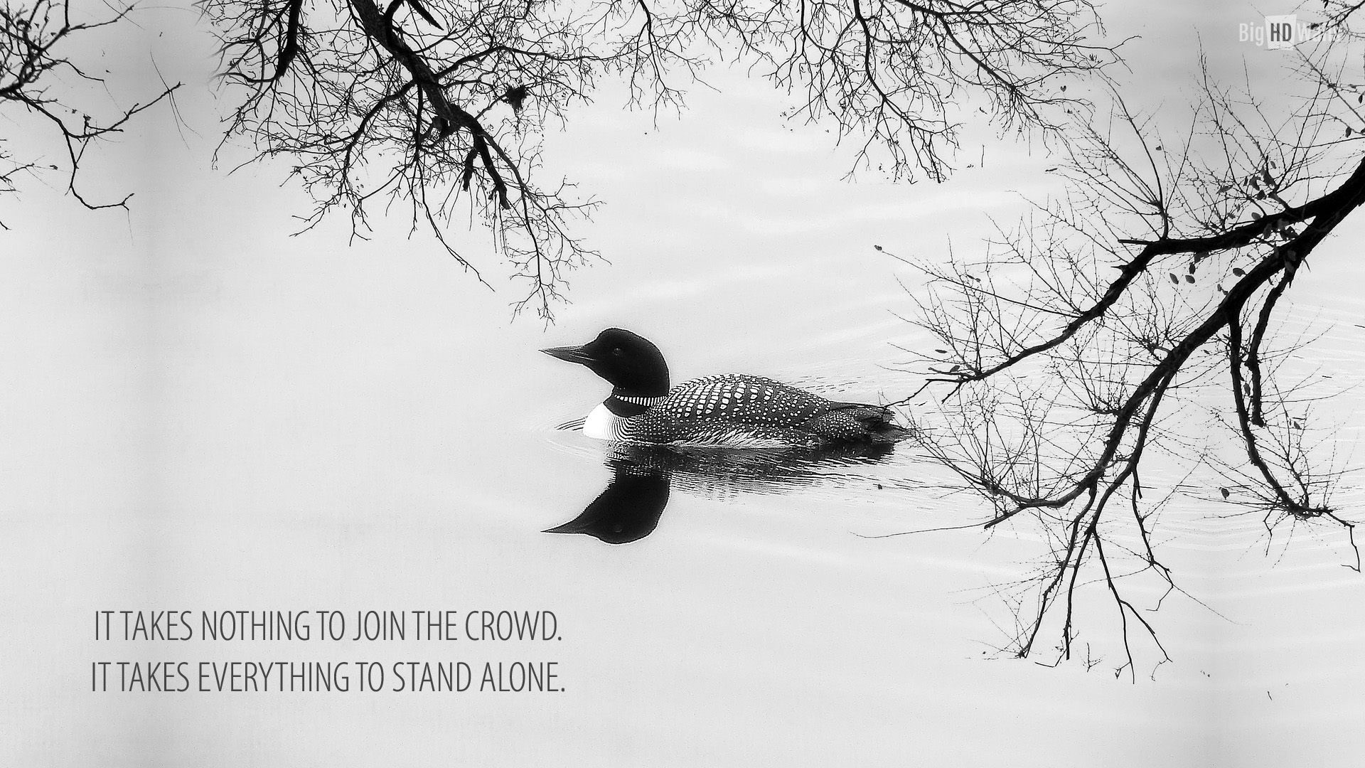 Im Alone Quotes Wallpaper Hd Quotes About Swan 132 Quotes