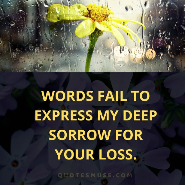 35 Words of Comfort for A Grieving Family to Recover Soon