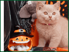 Halloween Background Cute Images