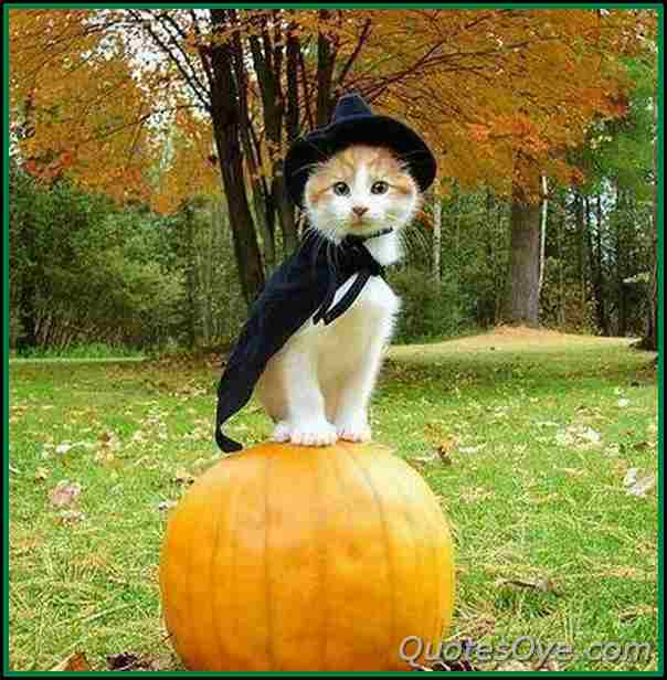 Pictures OF Halloween cat Pictures