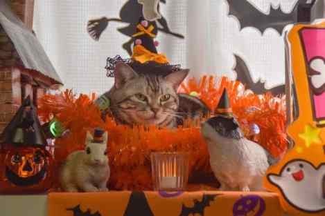 cute cat Halloween background Images