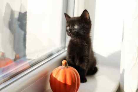 cute Halloween background photos for computer