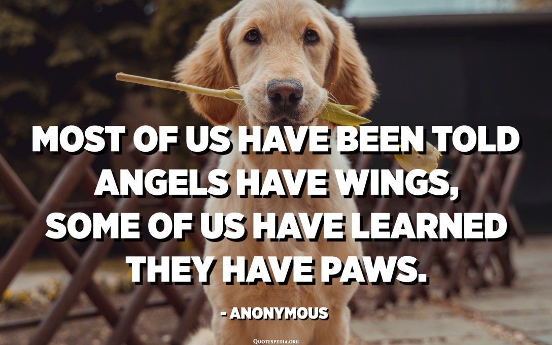 Most of us have been told angels have wings, some of us have learned they have paws. - Anonymous