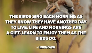 The birds sing each morning as they know they have another day to live. Life and mornings are a gift. Learn to enjoy them as the birds do. - Unknown