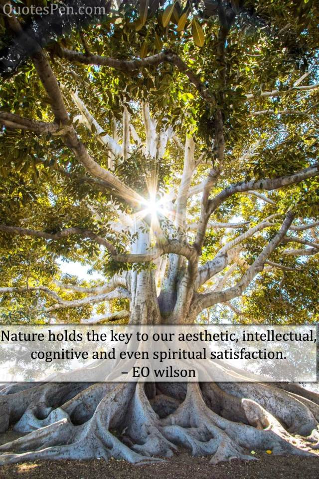 nature-holds-the-key