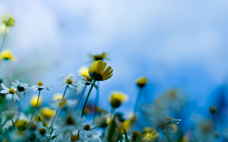 Nature-Flowers-Wallpapers-H