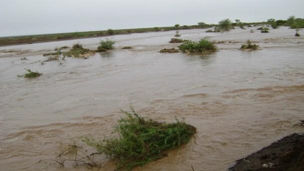 roob | Somalidiasporanews.com