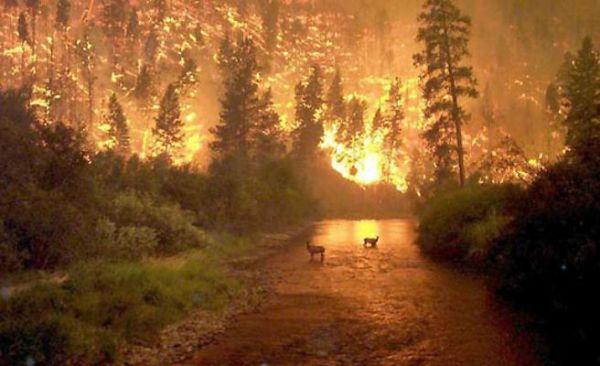 incendio-bosque-asturias