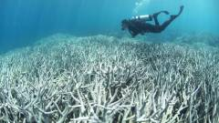 barrera de coral muerta