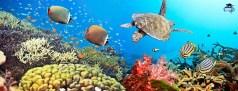 salvar barrera de coral australia
