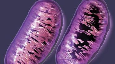 mitocondrias--644x362