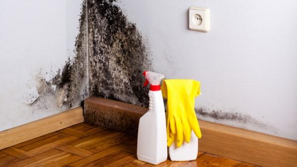 Eliminar las manchas de moho de las paredes - qvo