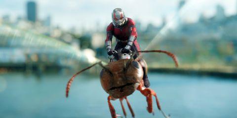 ant man volando en hormiga