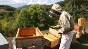 Foto_apicultor