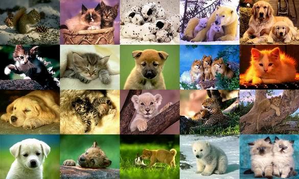 Animals Photo Screensaver Volume 3 10 Screenshots