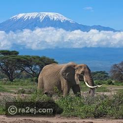 جبل كليمنجارو - تنزانيا