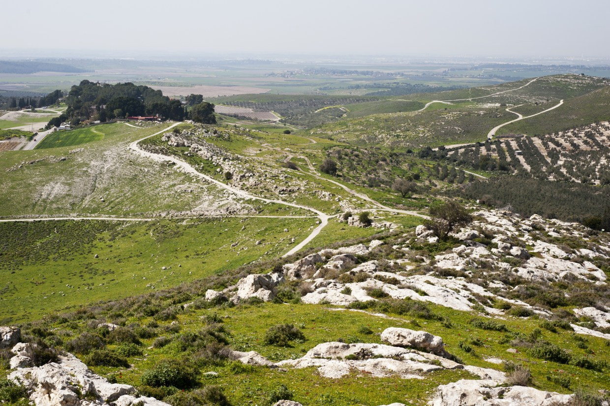 Shefelah Judean Lowlands Green forest view