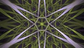 green-grass-grows