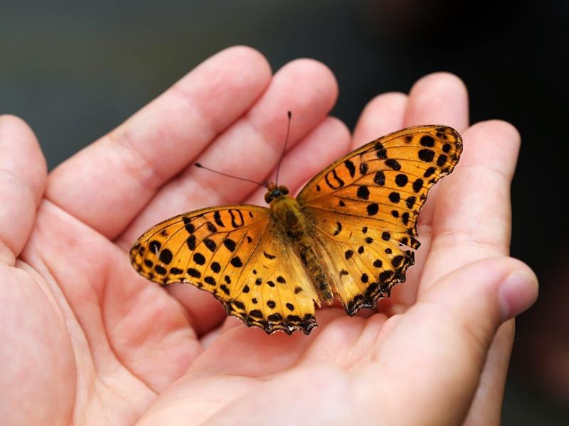Esapolis il museo vivente degli insetti a Padova