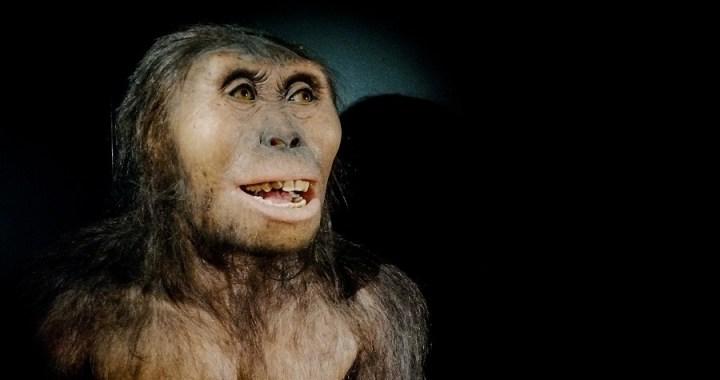 Australopiteco e anomalia avambraccio: naturale?