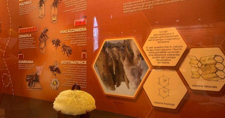 La via delle Api: Museo civico di Zoologia