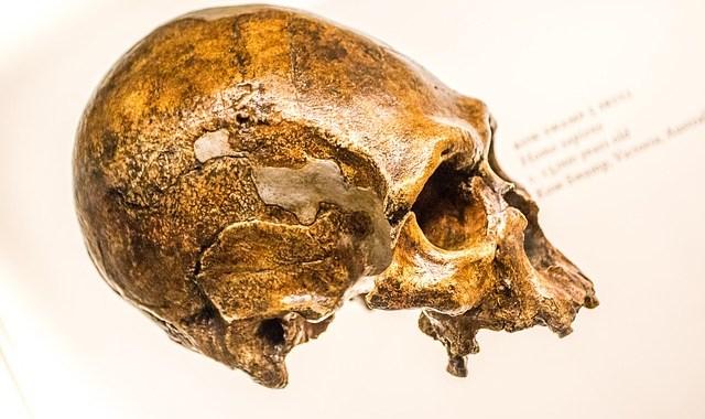 Neanderthal: nuova prospettiva sui genomi