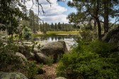 baja-pine-forrest-trail-of-missions-2017-harroldphoto-01