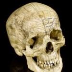 skull-jpgre