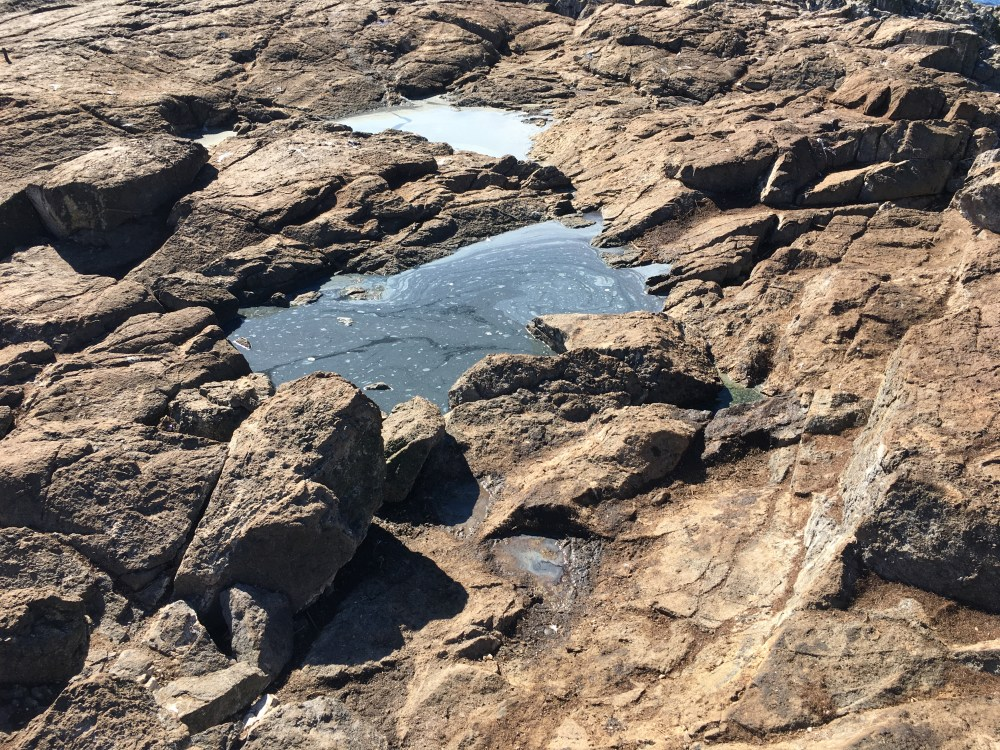 medium resolution of upper tidepools of the southwest knoll have been heavily impacted by sealion excrement