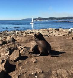 california sea lion in the area  [ 4032 x 3024 Pixel ]