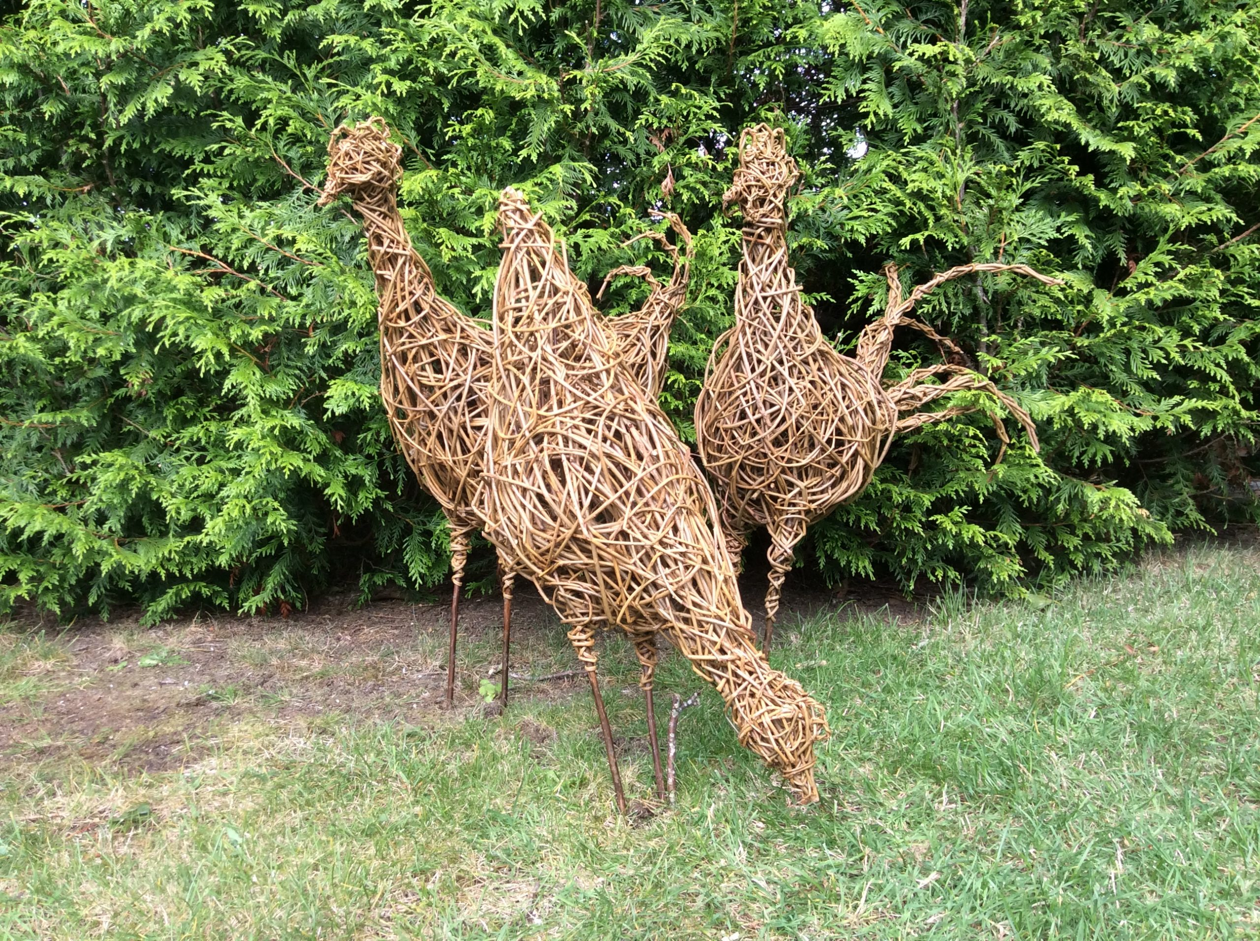 3 Willow Chickens