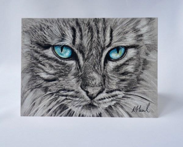 Blue Eye Cat 2